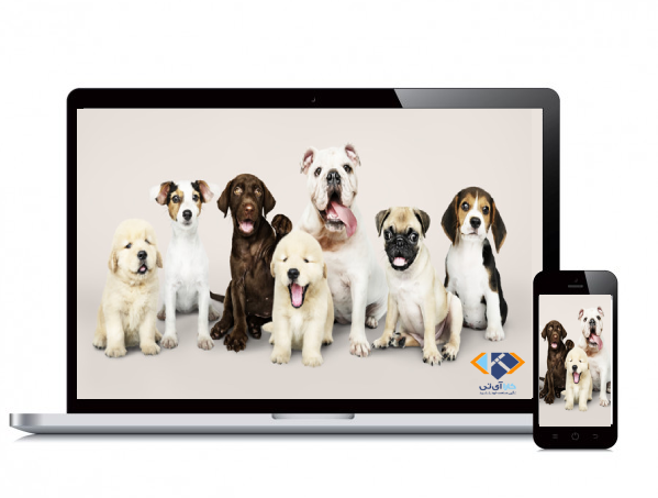 pet web design